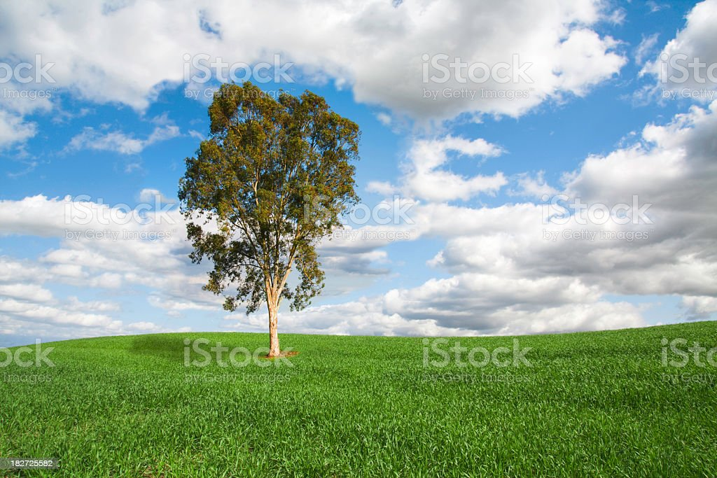 Spring Grassland Landscape With Lone Tree stock photo