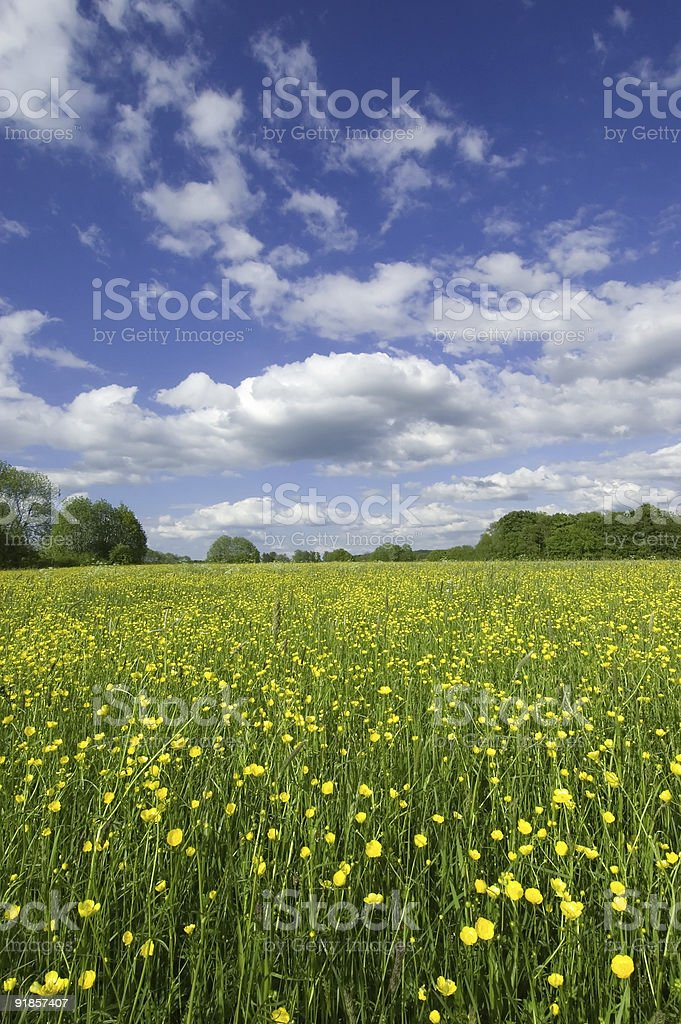 Spring Grassland royalty-free stock photo