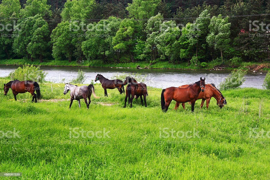 Spring. Grazing Horse. Piwniczna-Zdroj, Poland. stock photo