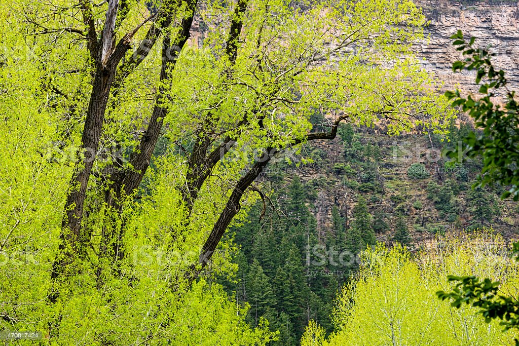Spring Green and Mountain Creek stock photo
