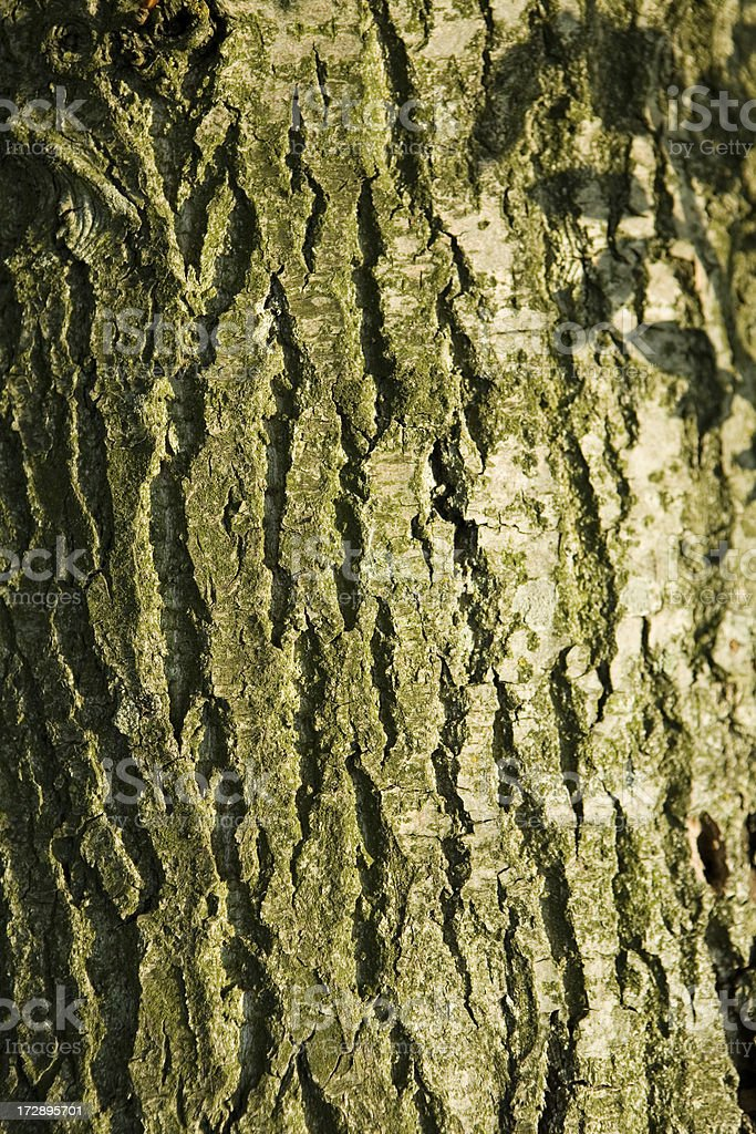 spring green bark pattern royalty-free stock photo