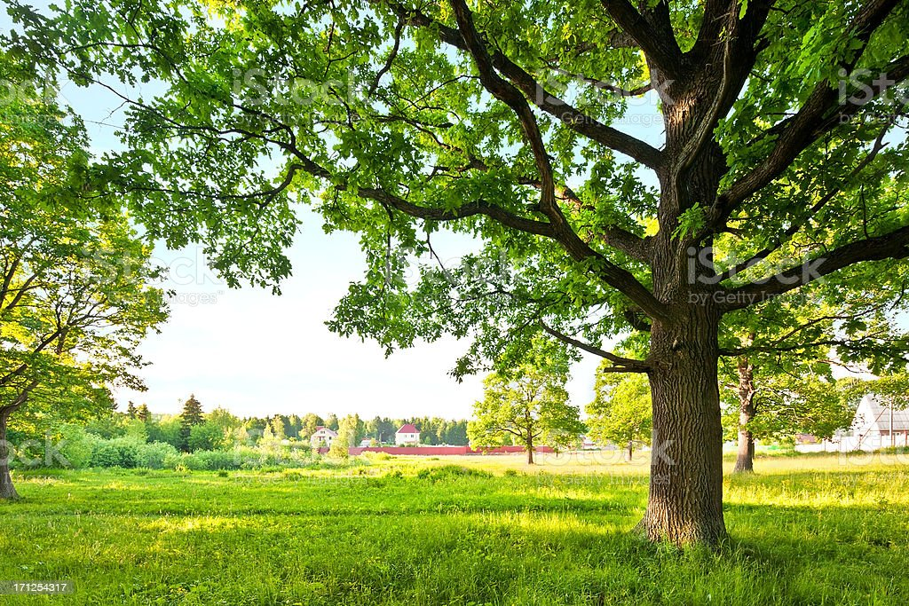 Spring green landscape royalty-free stock photo