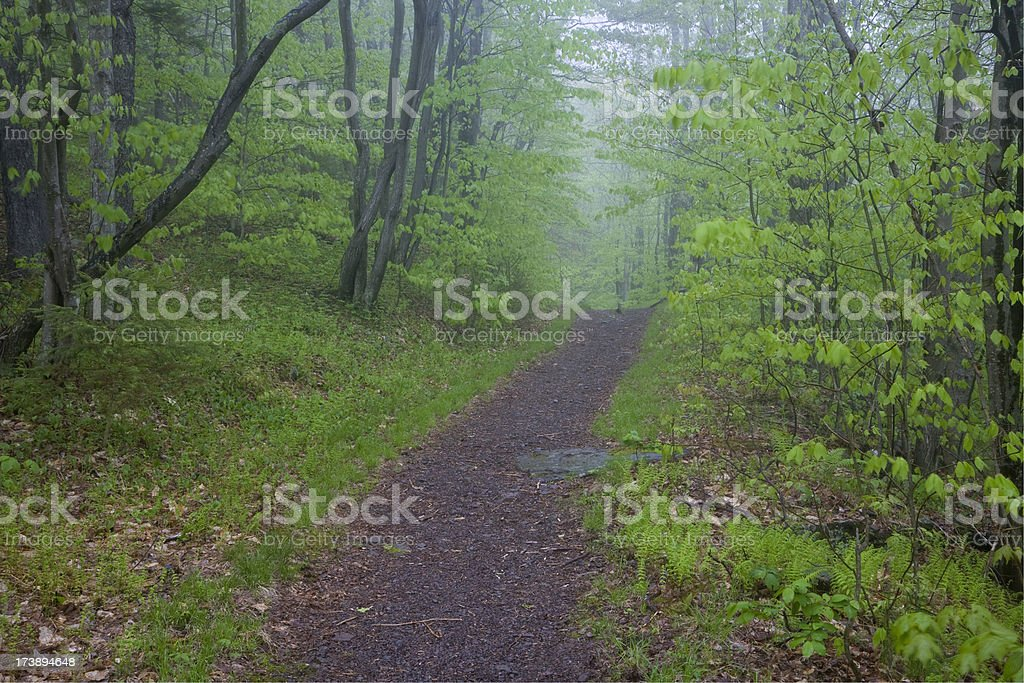 Spring Green Path in the Woods, Catskills, New York stock photo