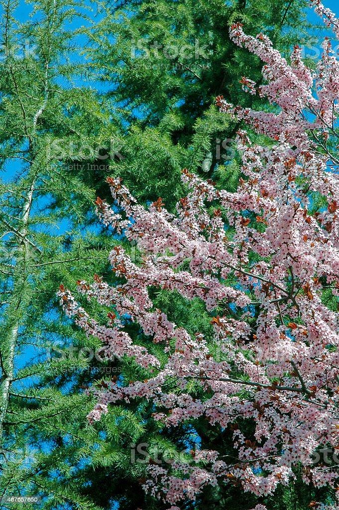 Spring green stock photo