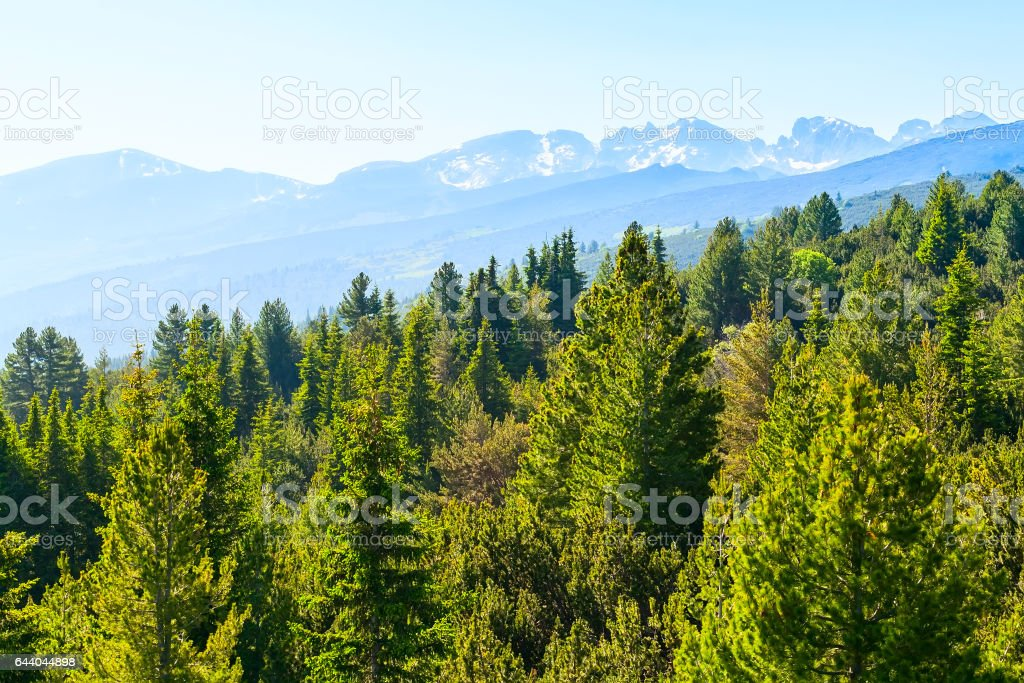 Spring green pine trees and snow mountains by Rila Lakes in Bulgaria stock photo