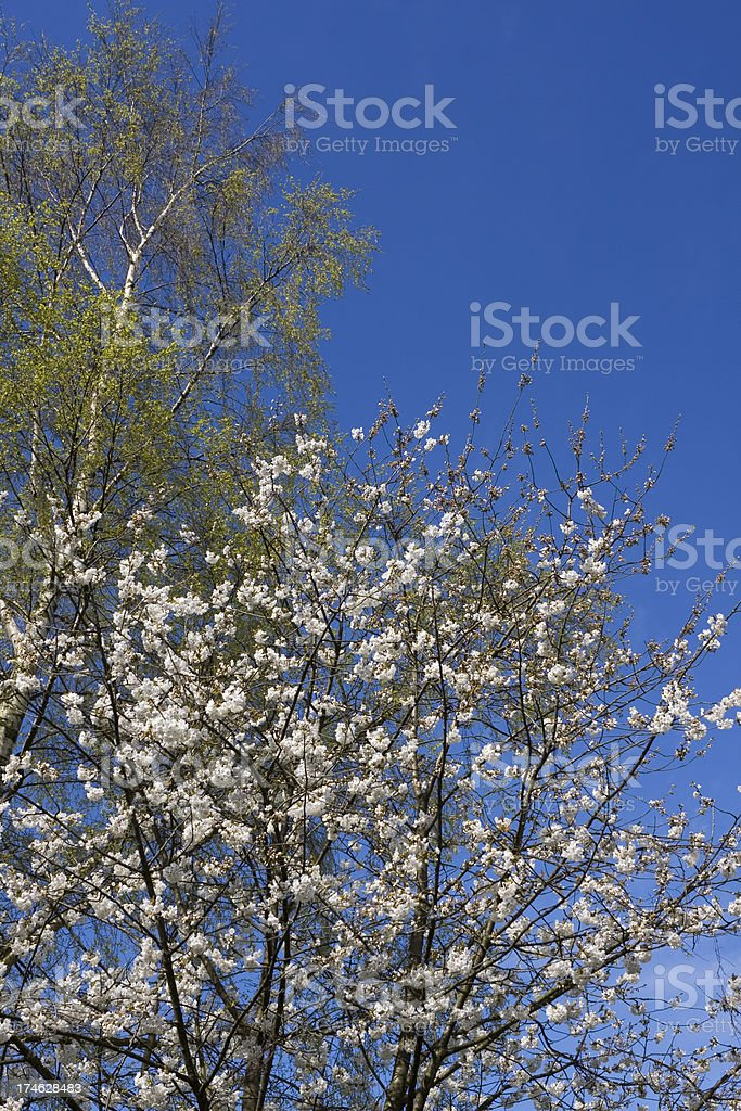Spring growth stock photo