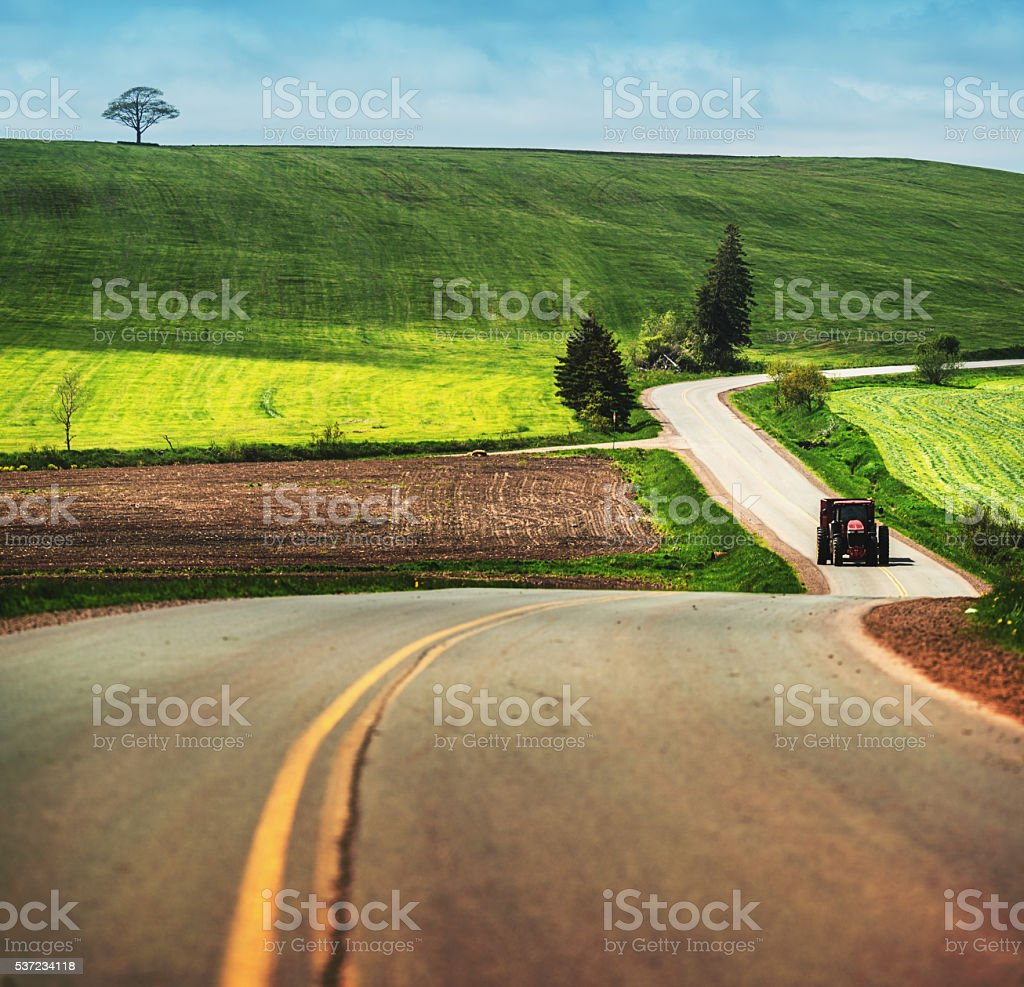 Spring Harvest stock photo