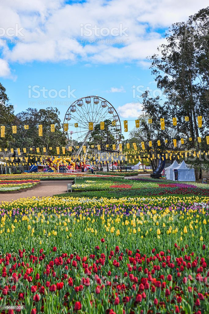 Spring has arrived in Canberra with Floriade stock photo
