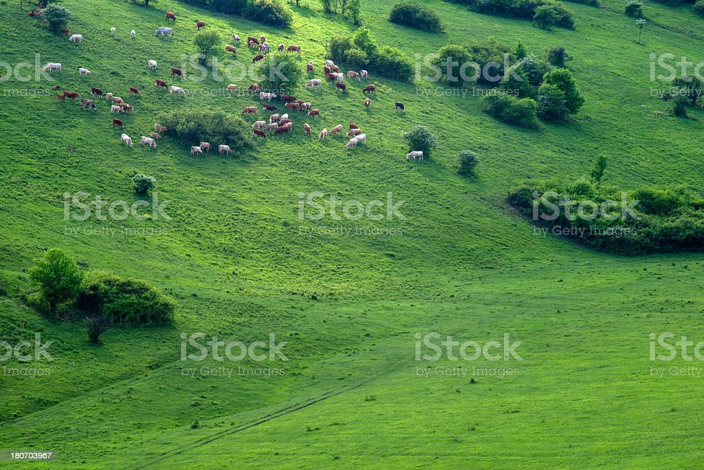 spring hill royalty-free stock photo