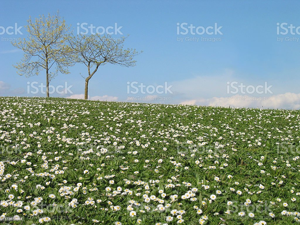 spring hillside royalty-free stock photo