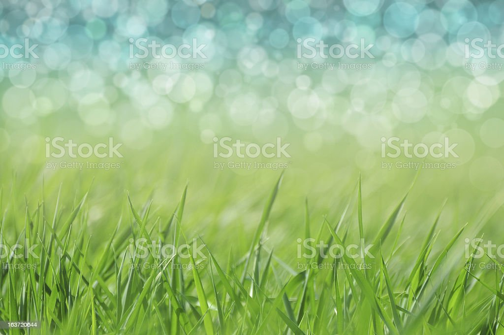 Spring / holiday background royalty-free stock photo