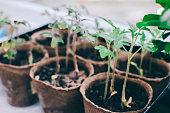 Spring Home Seedlings