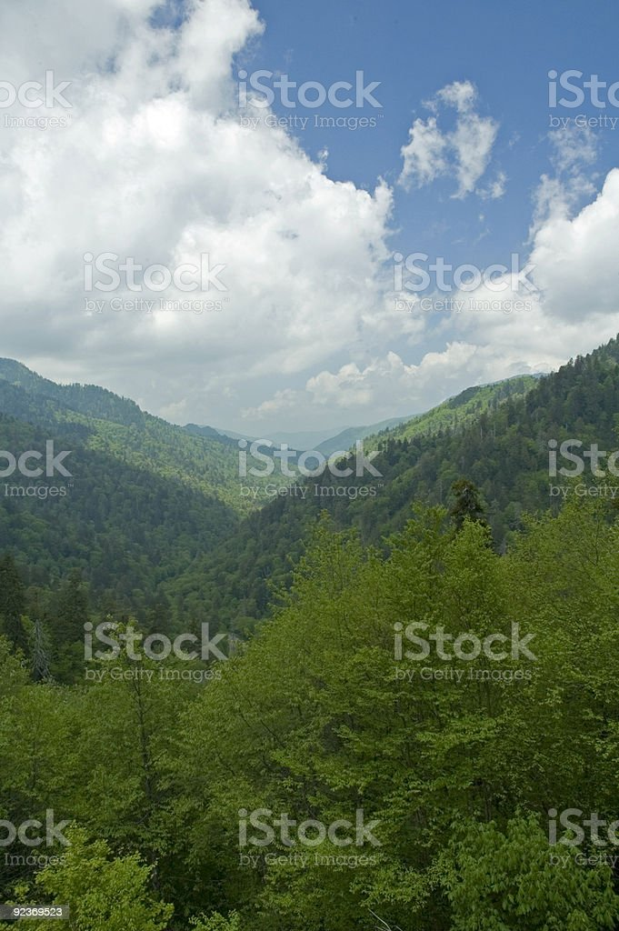 Spring Image, Great Smoky Mountains NP royalty-free stock photo