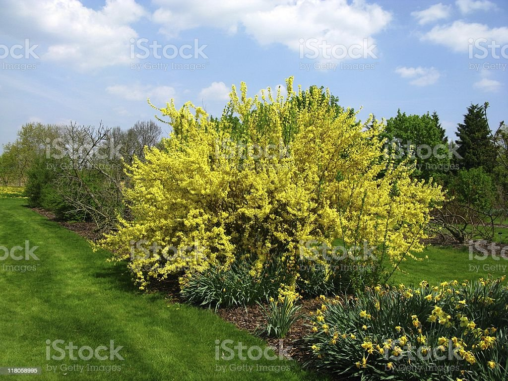Spring impression stock photo