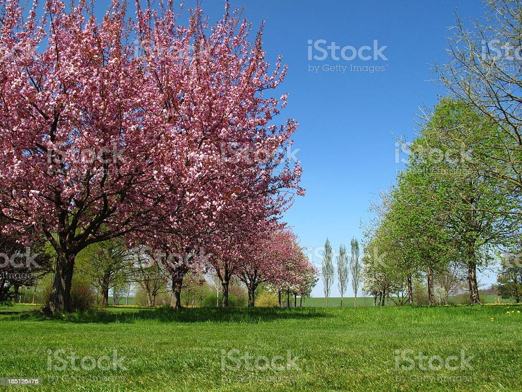 Spring impression royalty-free stock photo