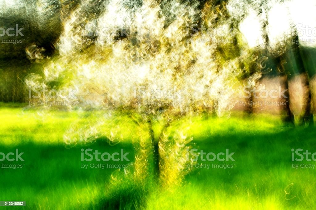 spring impression stock photo