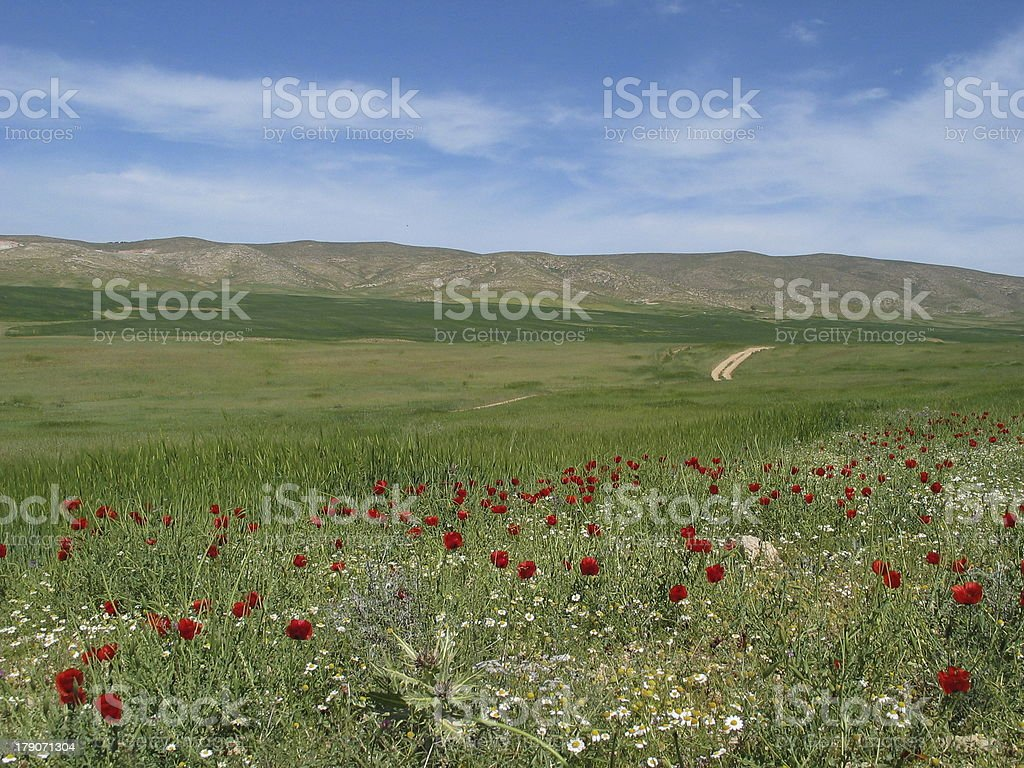 'Spring in a blooming desert, Arad, Israel' stock photo