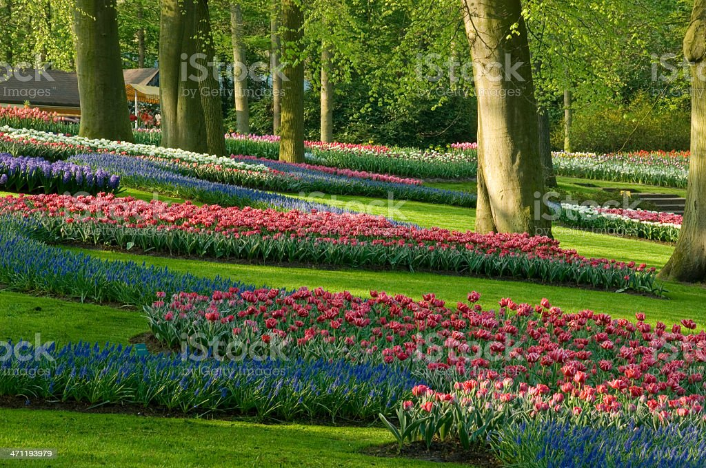Spring in a Park royalty-free stock photo