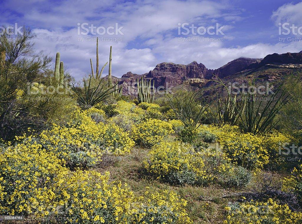 Spring in Arizona stock photo