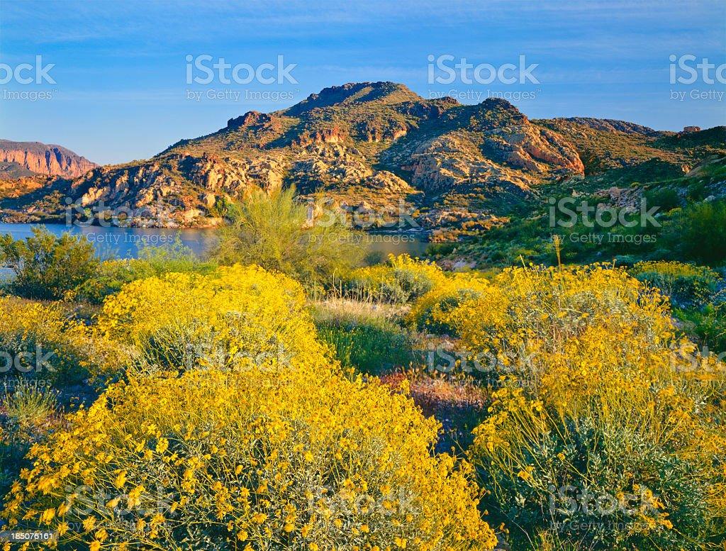 Spring in Arizona royalty-free stock photo