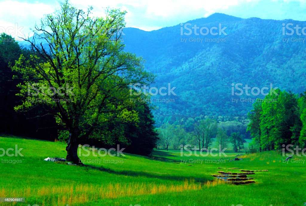 Spring in Cades Cove in The Great Smoky Mountains. stock photo