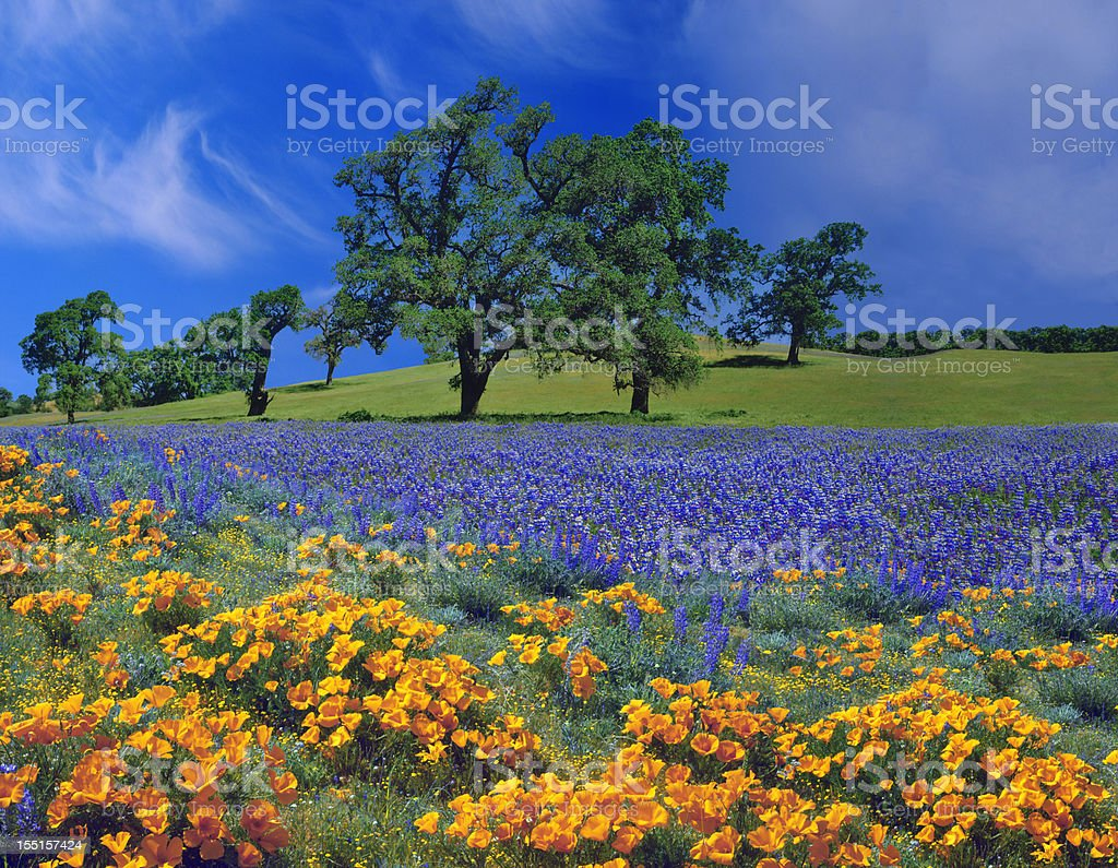 Spring In California royalty-free stock photo