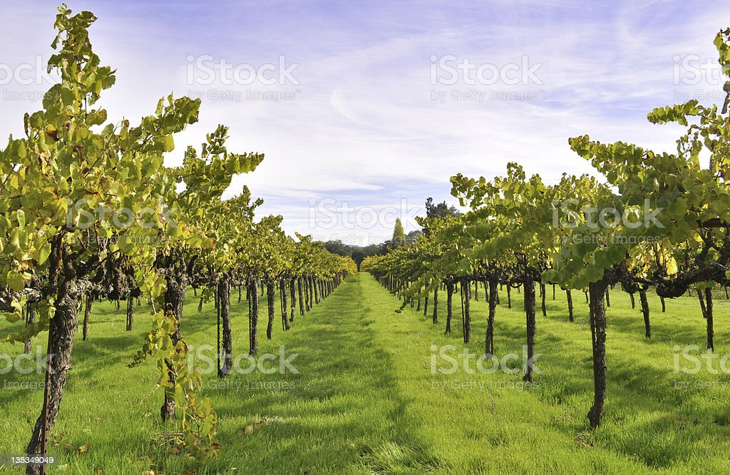 Spring in California Wine Country stock photo