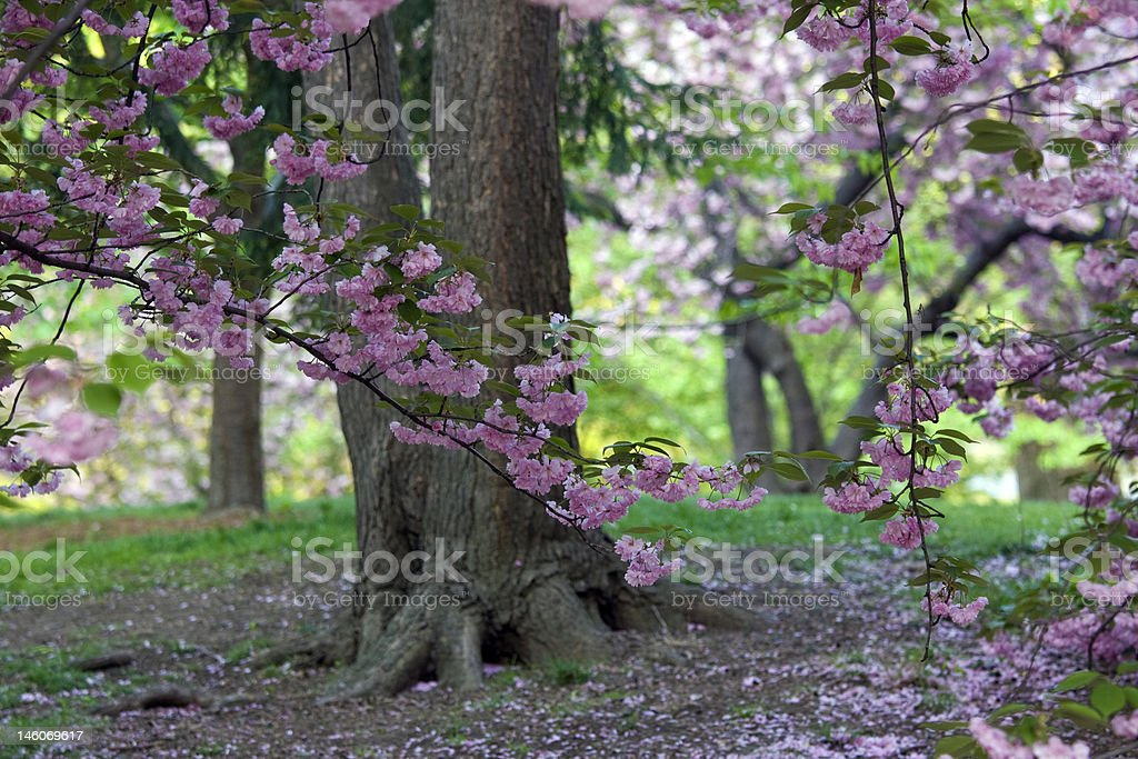 Spring in Central Park royalty-free stock photo
