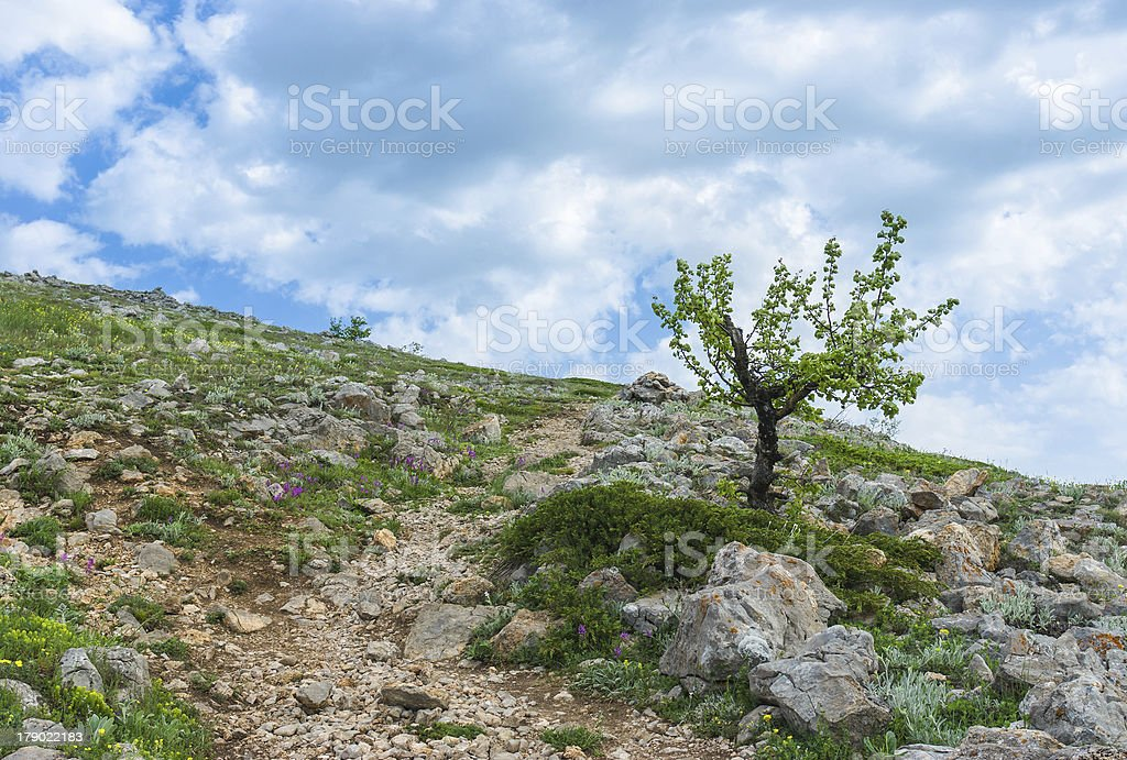 Spring in Crimean mountains at a height above 1000 metres. royalty-free stock photo