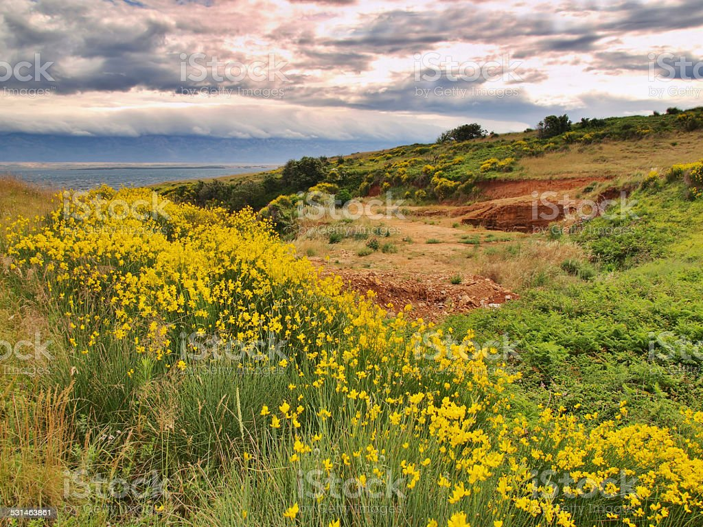 Spring in Dalmatia stock photo