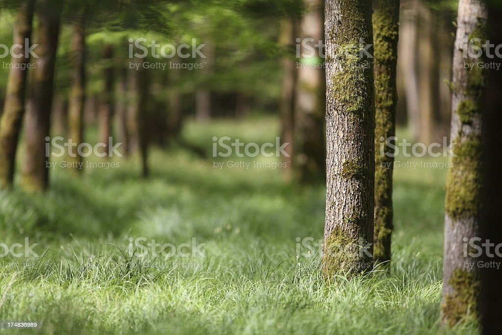 spring in frorest with tree trunk and green meadow royalty-free stock photo