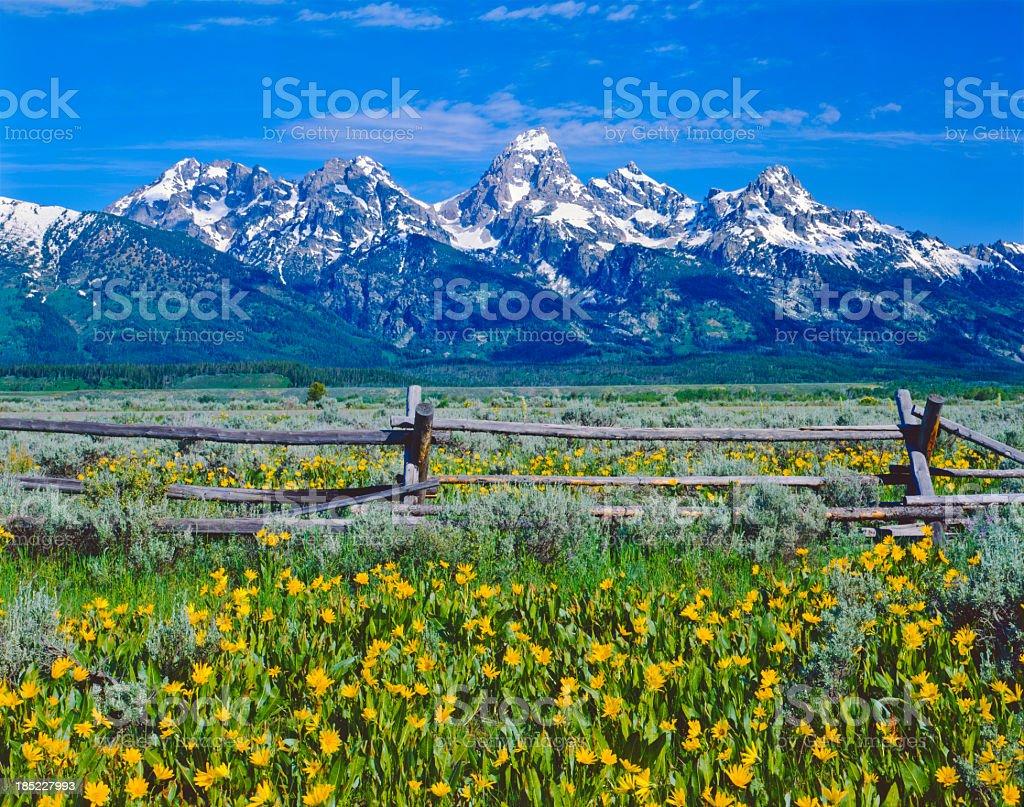 Spring in Grand Teton National Park stock photo