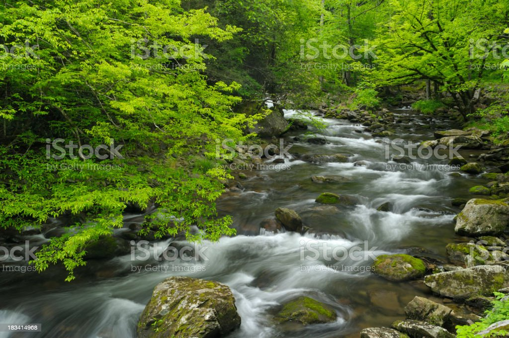 Spring in Great Smoky Mountains National Park, TN USA royalty-free stock photo