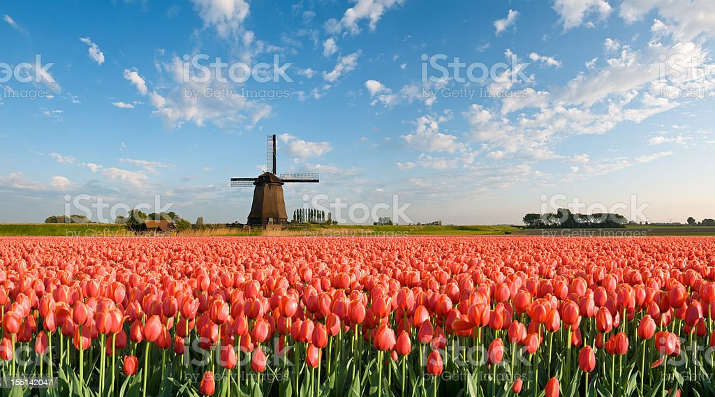 Spring in Holland royalty-free stock photo