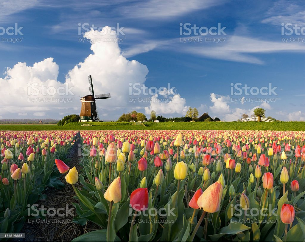 Spring in Holland stock photo