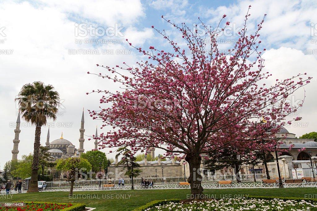 Spring in Istanbul. stock photo