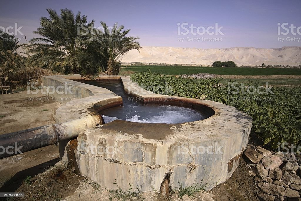 Spring in Kharga oasis stock photo