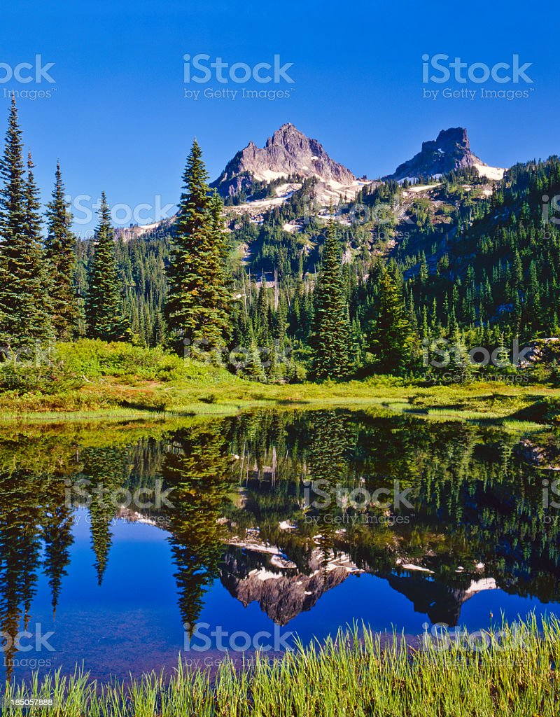 Spring in Mount Rainier National Park royalty-free stock photo