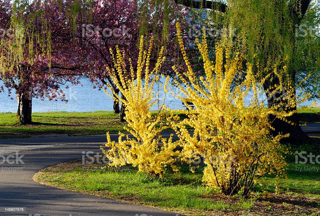 Spring in New England stock photo