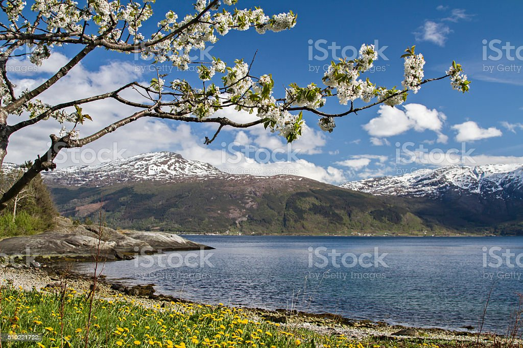 Spring in Norway stock photo