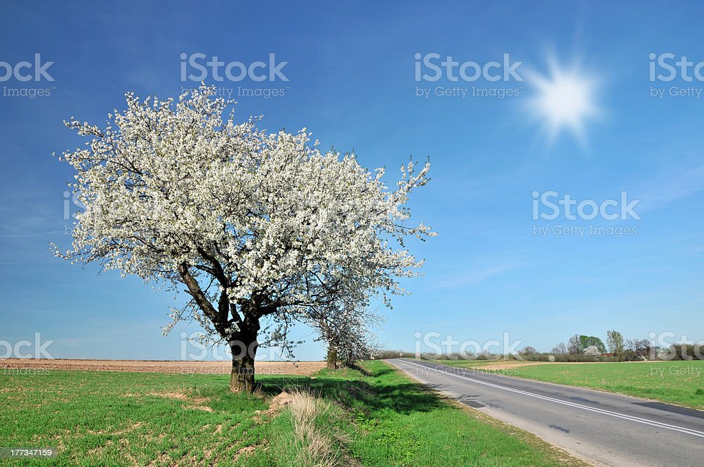 Spring in Poland royalty-free stock photo