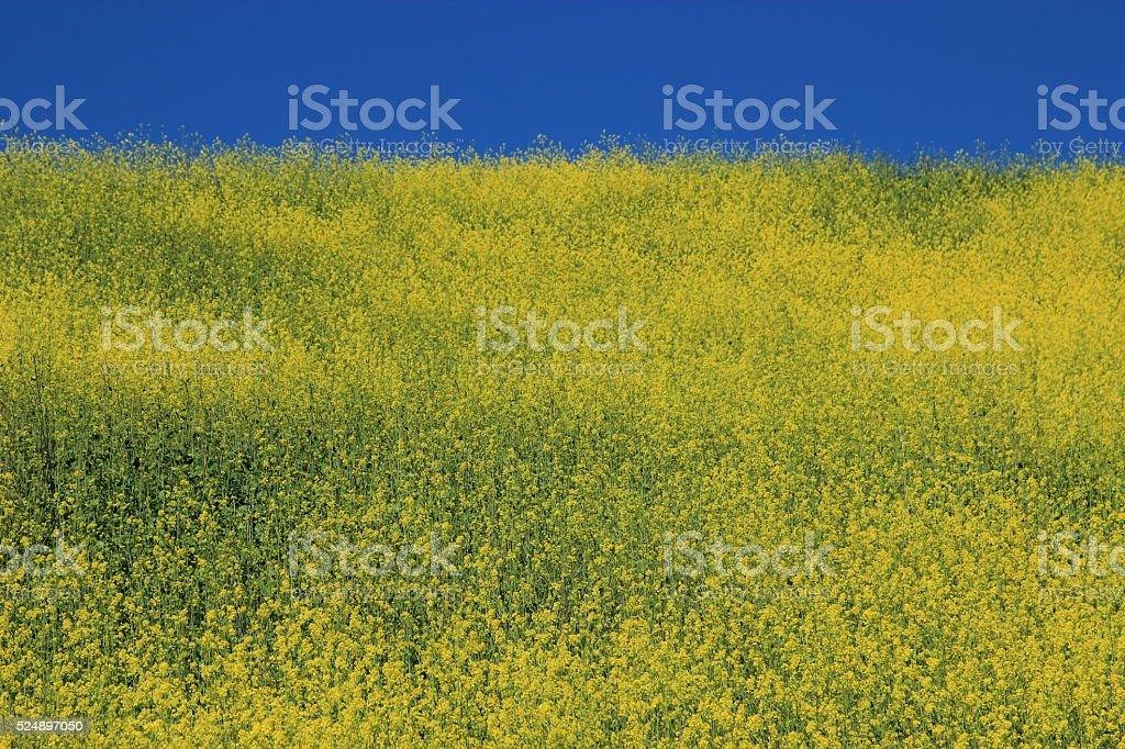 Spring in Santa Barbara stock photo