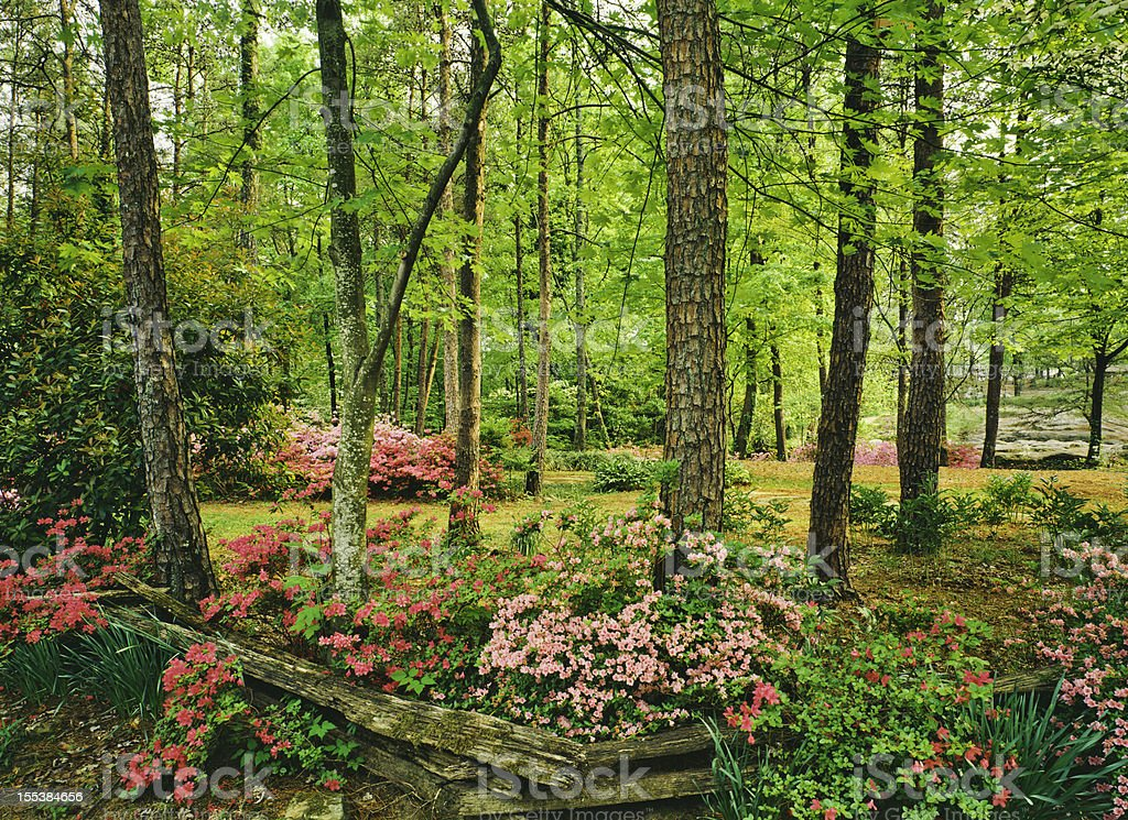 Spring in Southern Woodlands royalty-free stock photo