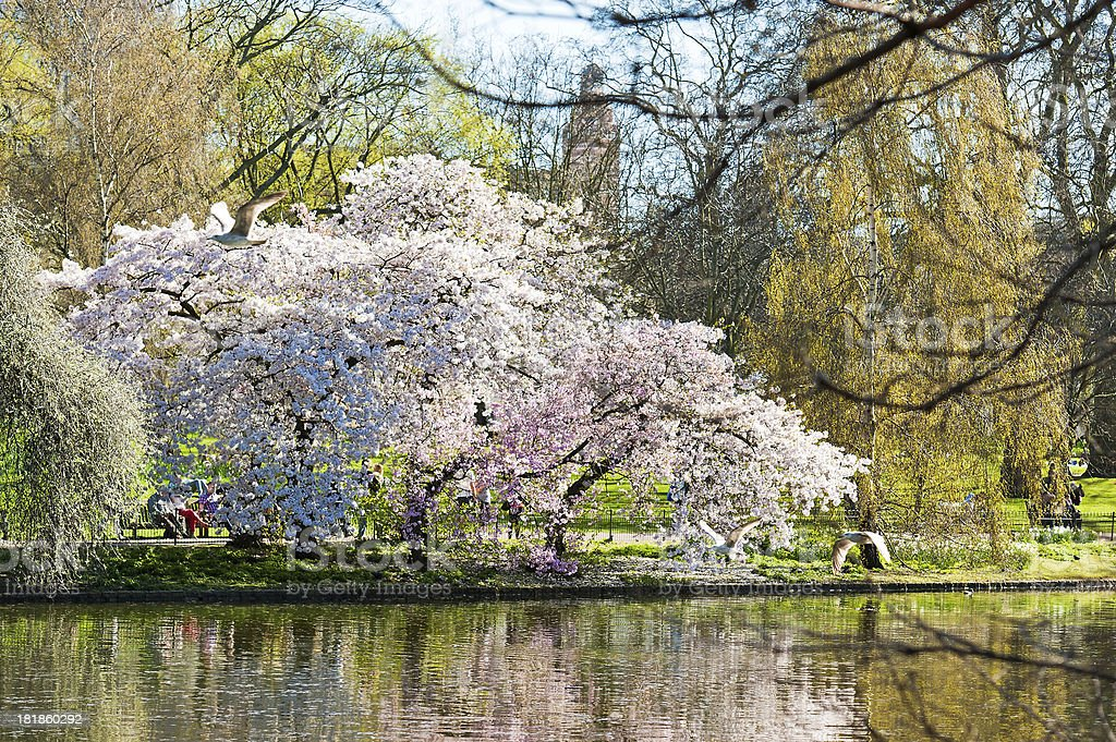 Spring in St James's Park royalty-free stock photo