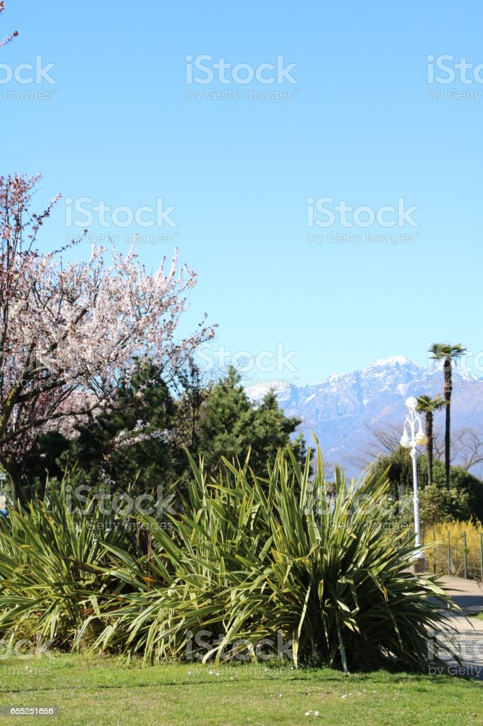 Spring in Stresa at Lake Maggiore, Piedmont Italy stock photo