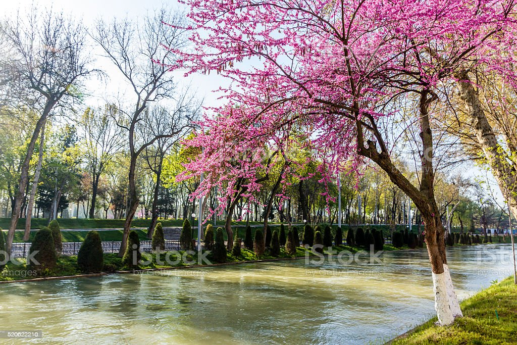 Spring in Tashkent stock photo
