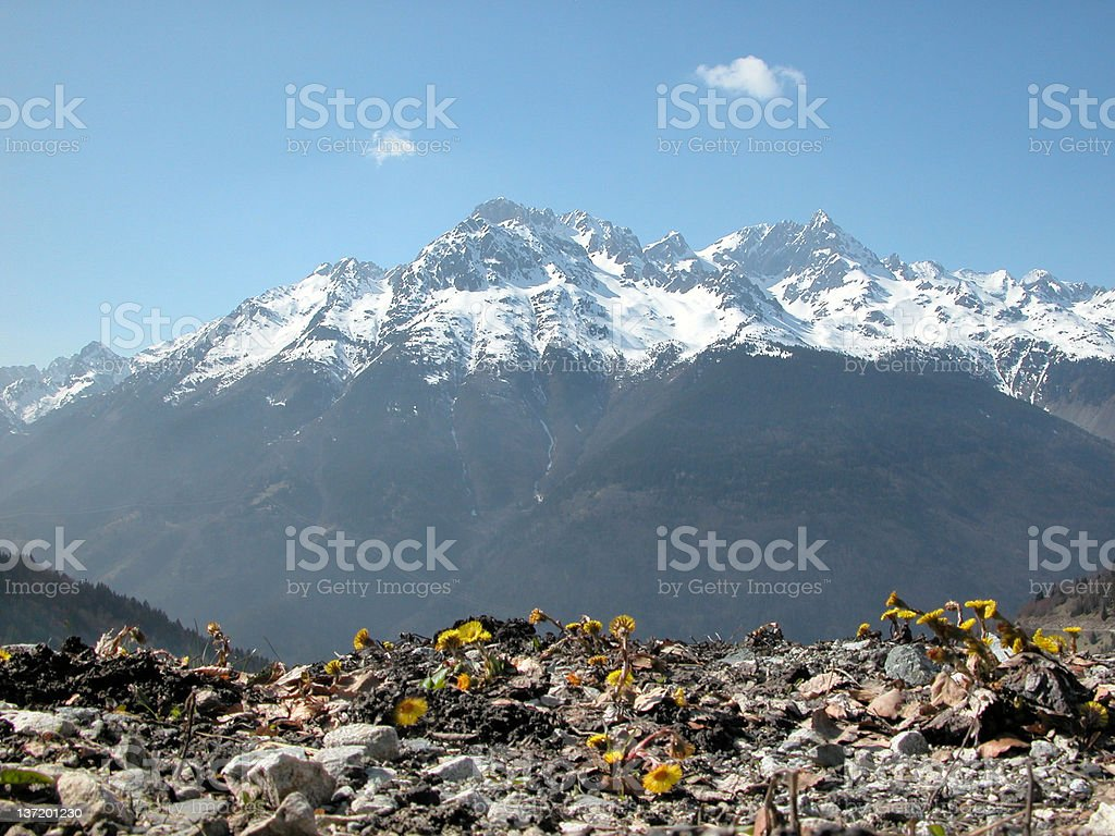 Spring in the Alps. royalty-free stock photo