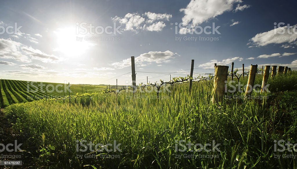 Spring in the Barossa Valley royalty-free stock photo