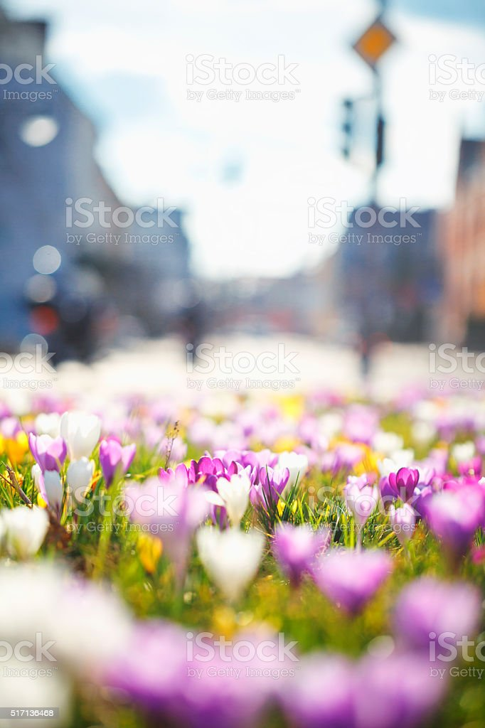 Spring in the city stock photo