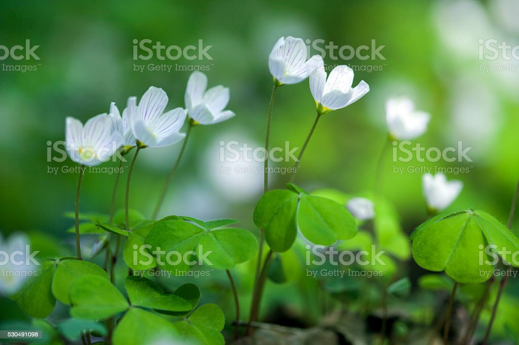 Spring in the forest. stock photo